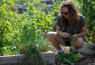 Laura Angelus prunes her garden plot at the Forest Park Community Garden on Saturday.